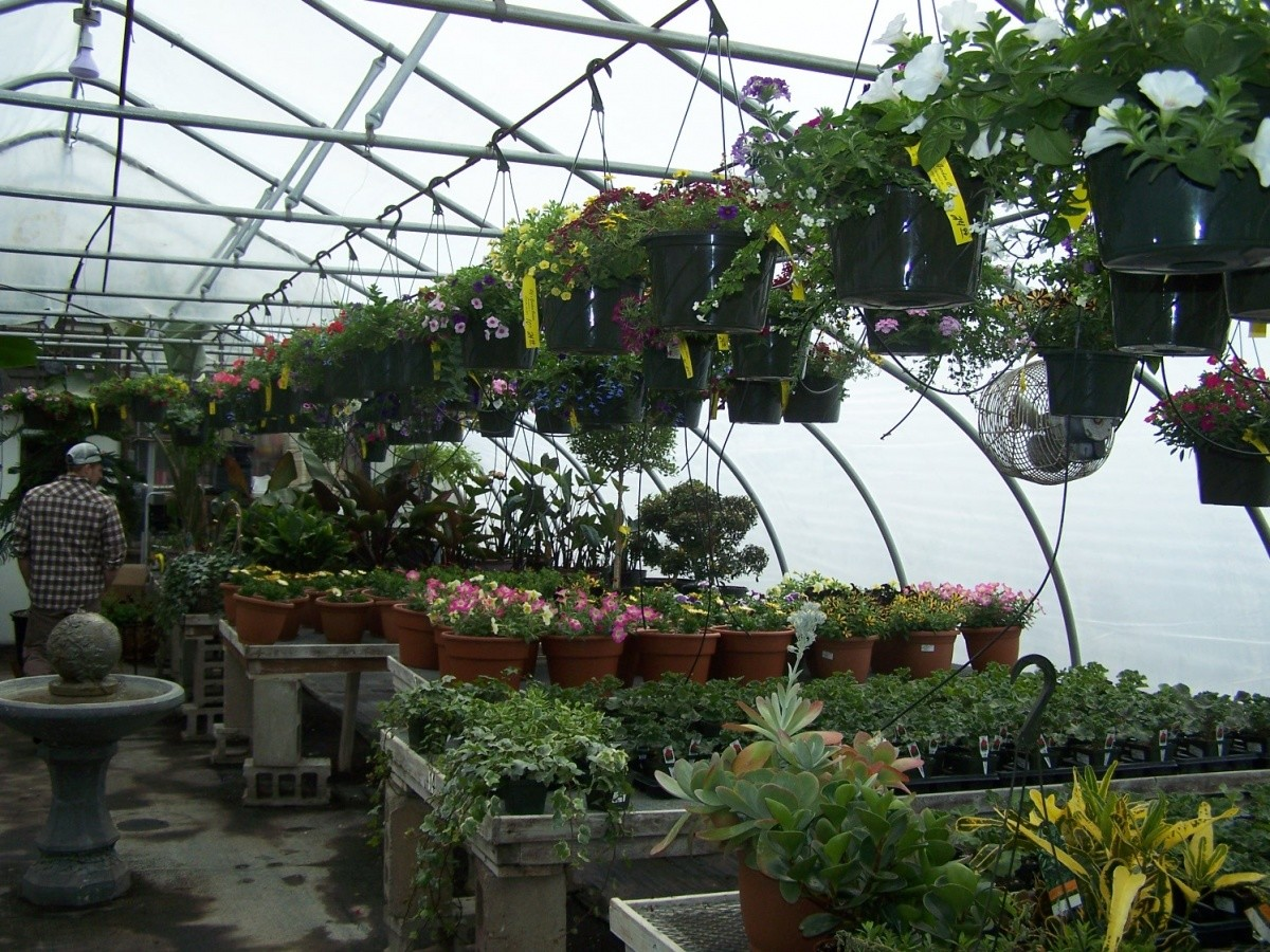 Plants in our greenhouse